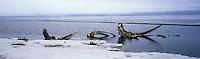 Bowhead whale bones on the beach at Kaktovik.