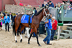 HOT SPRINGS, AR - APRIL 14: Oaklawn Handicap. Oaklawn Park on April 14, 2018 in Hot Springs,Arkansas. #11 City Of Light (Photo by Ted McClenning/Eclipse Sportswire/Getty Images)