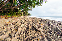 turtle tracks, left on the sandy beach by nesting female leatherback sea turtle, Dermochelys coriacea, Grand Riviere, Trinidad, Trinidad and Tobago, Caribbean Sea, Atlantic Ocean
