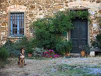 Dog sits outside old farm building at Villa Rosa agriturisimo, Panzano in Chianti, Ital