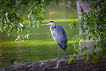 Stricker's Pond Conservancy Area, Middleton, Dane County