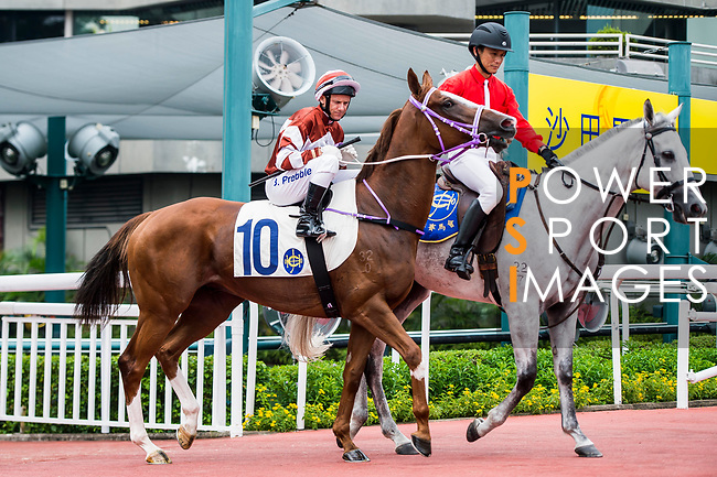 Horse Sight Seeing ridden by Brett Prebble prior to the Race 4, Lung Wui Handicap, at the Sha Tin Racecourse on 03 September 2017 in Hong Kong, China. Photo by Marcio Rodrigo Machado / Power Sport Images