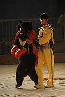 An Asian brown bear called Hui Hui, enters the boxing ring wearing red gloves and a cape and prior to a bizarre bear boxing spectacle held twice daily at a Chinese wildlife park that describes itself as a bear sanctuary in Guanxi Province, China...SINOPIX PHOTO