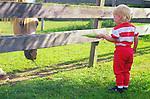 Horses with Children