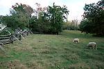 Sheep pasture with split rail fence Williamsburg Virginia, Fine Art Photography by Ron Bennett, Fine Art, Fine Art photography, Art Photography, Copyright RonBennettPhotography.com ©