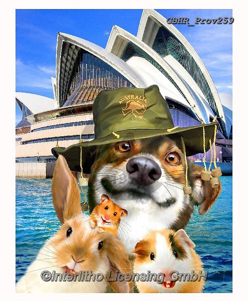Howard, REALISTIC ANIMALS, REALISTISCHE TIERE, ANIMALES REALISTICOS, selfies, paintings+++++,GBHRPROV259,#a#, EVERYDAY,dog,rabbit,australia,sydney,opera house