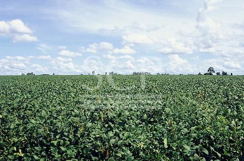 Parana State, Brazil. Soya (glycine max) field.