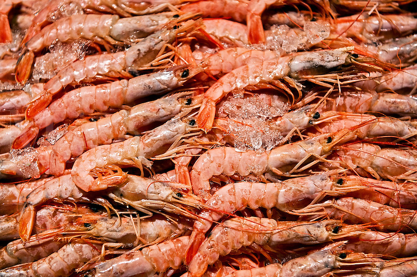 Shrimp in a seafood market.