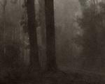 Two trees in fog<br /> Cyanotype + Coffee toning