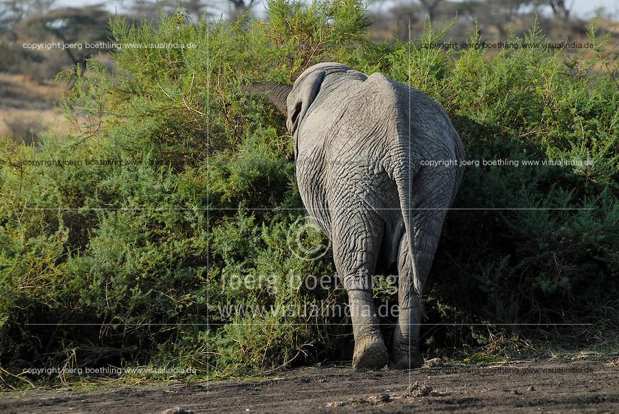 TANZANIA Serengeti Nationalpark near Arusha , elephant / TANSANIA Serengeti Nationalpark bei Arusha , Elefant