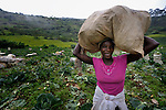 A woman carries a bag of cabbages she has harvested in the mountainous community of Foret-des-Pins, Haiti. Behind her is a hillside where trees have been planted as part of a reforestation project. Plagued by deforestation, much of it to produce charcoal for urban cooking stoves, residents of this community are working with advisors from the Lutheran World Federation to reforest and protect their environment. The project is funded in part by International Orthodox Christian Charities.