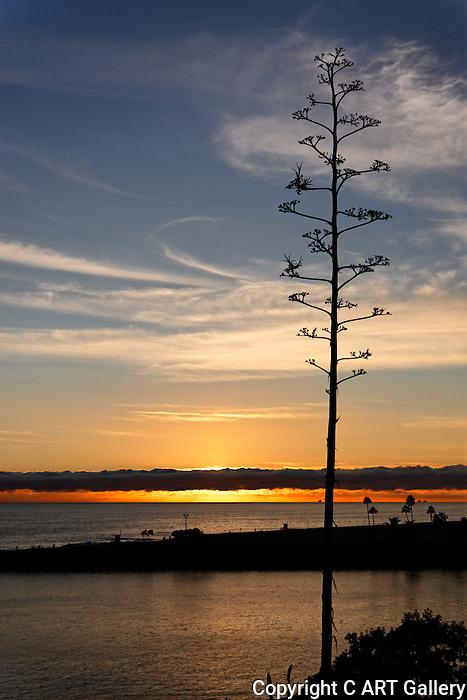 Sunset at the Wedge 3, Balboa Peninsula, CA.