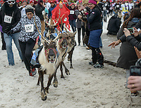 Reindeer blast through runners during the Running of the 2016 Running of the Reindeer in downtown Anchorage. Photo by James R. Evans