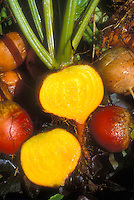 Golden Beet: Beet 'Burpee's Golden Beetroot' root crop cut open to show yellow vegetable interior, with whole beets for comparison of outer skin color.