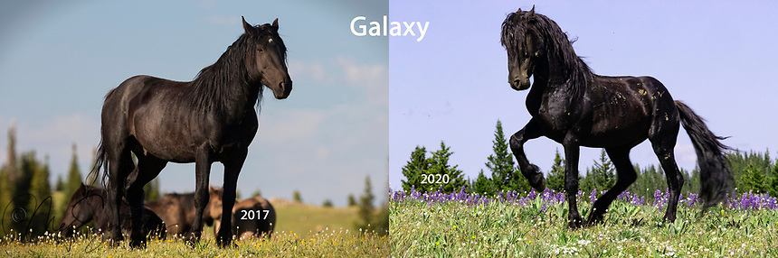 A younger Galaxy as a band stallion and Galaxy now as a bachelor, still got it though!
