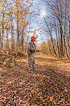 Ruffed grouse hunting in autumn