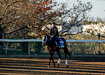 November 4, 2020: Fire At Will, trained by trainer Michael J. Maker, exercises in preparation for the Breeders' Cup Juvenile Turf at Keeneland Racetrack in Lexington, Kentucky on November 4, 2020. Scott Serio/Eclipse Sportswire/Breeders Cup