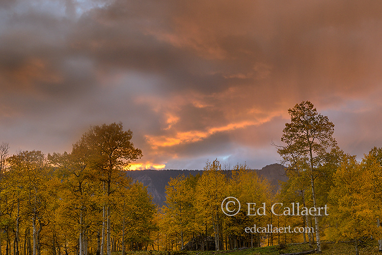 Sunset, Rain, Aspen, Populus Tremula, Cimmaron Country, Uncompahgre National Forest, Colorado