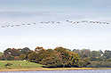 2014_10_05_CANADA_GEESE