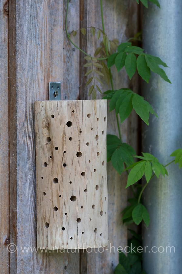 Wildbienen-Nisthilfe aus einem gespaltenen und entrindeten Halbstamm, Eichenstamm, Eiche, Hartholz, wurde mit unterschiedlich dicken Bohrungen versehen. Wildbienen-Nisthilfen, Wildbienen-Nisthilfe selbermachen, selber machen, Wildbienenhotel, Insektenhotel, Wildbienen-Hotel, Insekten-Hotel
