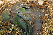 Artifact (leather boot) at logging Camp 22 along the East Branch & Lincoln Railroad (1893-1948) in Lincoln, New Hampshire. This logging camp was located along the North Fork Branch of the EB&L Railroad in today's Pemigewasset Wilderness. The removal of artifacts from federal lands without a permit is a violation of federal law.