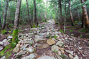 A steep and rocky section of the Mt Tecumseh Trail in the White Mountains of New Hampshire. This photo shows how this section of the trail looked in 2012 before it was transformed into an extensive stone staircase.
