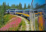 Denali Star and Fireweed, Alaska Railroad, Alaska