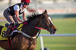 MEYDAN,DUBAI-MARCH 25: Gabrial,trained by Richard Fahey,exercises in preparation for the Dubai Turf at Meydan Racecourse on March 25,2016 in Meydan,Dubai (Photo by Kaz Ishida)