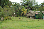 A thatched hut and chickens in the field in the village of Crique Sarco, southern Belize.