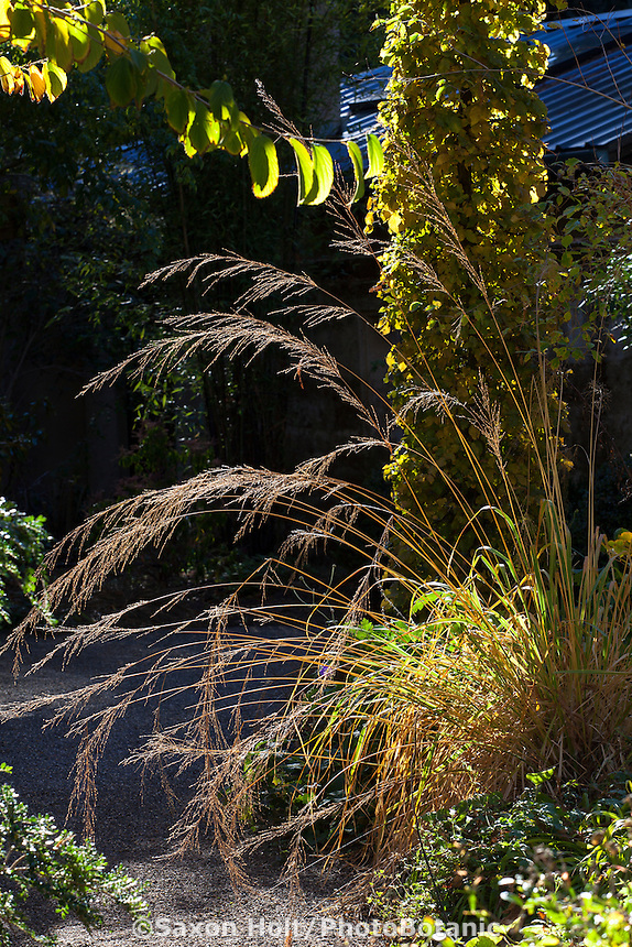 Ornamental grass catching light by gravel path along mixed border in Gary Ratway garden