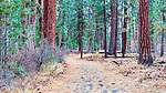 Trail through Larch and Pines, Shevlin Park, Bend, Oregon Park and Recreation, along scenic Tumalo Creek includes hiking, biking, foot bridges, aspen trees, and pine forests on the west side of Bend.