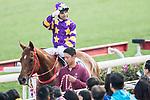 Jockey Joao Moreira riding Western Express celebrates winning the Tolo Harbour Handicap as part of Hong Kong Jockey Club Horse Racing Season 2016-17 on 02 April 2017, at Sha Tin Racecourse in Hong Kong, China. Photo by Chris Wong / Power Sport Images