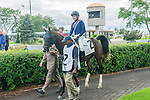 U S Marshal(2) with Jockey David Moran aboard before the Summer Stakes at Woodbine Race Course in Toronto, Canada on September 13, 2014 with Jockey Patrick Husbands aboard.