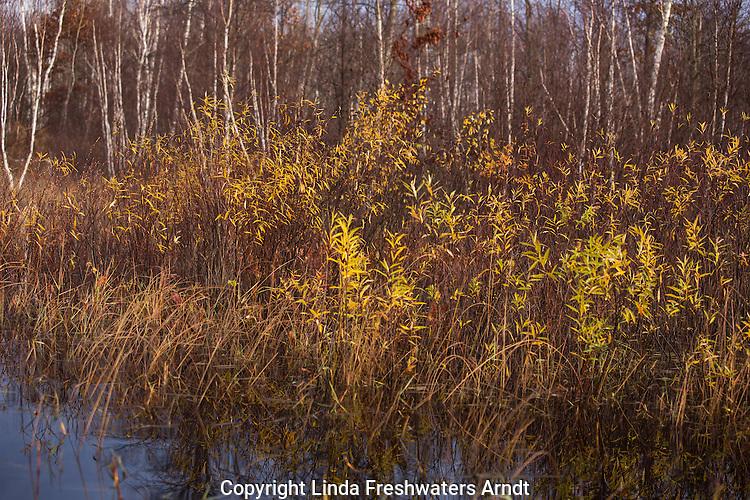 Wilderness lake in northern Wisconsin.