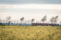 racing in the open (and infamously windy) Moeren<br /> <br /> AG Driedaagse Brugge-De Panne 2020 (1.WWT)<br /> 1 day race from Brugge to De Panne (156km) <br /> <br /> ©kramon