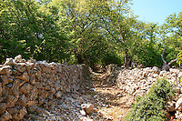 Ancient roads through the protected sub- Mediterranean broad leaved deciduous forest of  Tramutana, Cres Island, Croatia
