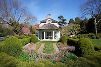 View of a boxwood enclosed area of the garden in early spring planted with 'Negrita' tulips looking towards the pavilion