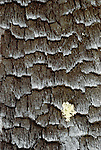 Lichen on charred log, Los Glaciares National Park, Argentina