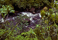 Wailau stream gushes through the rainforest on Molokai's pristine north shore.