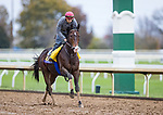 Higher Power, trained by John W. Sadler, exercises in preparation for the Breeders' Cup Classic at Keeneland 10.30.20