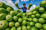 Bottle gourd by Abdul Momin