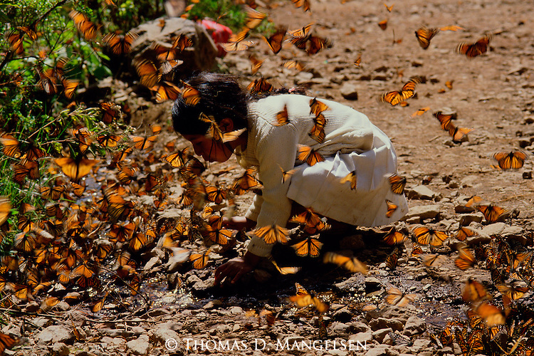 A young girl is surrounded by monarch butterflies.