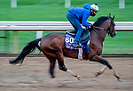 October 30, 2020: Front Run The Fed, trained by trainer Chad C. Brown, exercises in preparation for the Breeders' Cup Turf Sprint at Keeneland Racetrack in Lexington, Kentucky on October 30, 2020. Scott Serio/Eclipse Sportswire/Breeders Cup/CSM