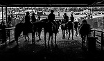 June 5, 2021: Lead ponies wait in the tunnel before the running of the Belmont Stakes on Belmont Stakes Day at Belmont Park in Elmont, New York. Scott Serio/Eclipse Sportswire/CSM