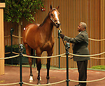 12 September 2010.  Hip #27 Empire Maker - Collect Call colt sold for $300,000 at the Keeneland September Yearling Sale.  Consigned by Taylor Made.