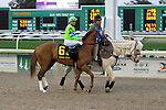 February 21, 2015:War Story with Kent J Desormeaux up in the Risen Star Stakes at the New Orleans Fairgrounds Risen Star Stakes Day. Steve Dalmado/ESW/CSM