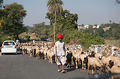 India; road from Udaipur to Jodhpur. Sheepherder in typical red rajasthan turban.