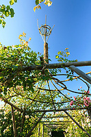 """Les jardins du prieuré d'Orsan : """"le jardin de Marie"""", jardin clos panté de rosiers grimpants blancs et roses<br /> <br /> Mention obligatoire du nom du jardin et pas d'usage publicitaire sans autorisation préalable."""