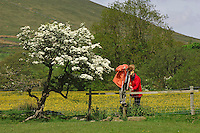 Walkers crossing a stile next to a Blackthorn tree in blossom...Copyright..John Eveson, Dinkling Green Farm, Whitewell, Clitheroe, Lancashire. BB7 3BN.01995 61280. 07973 482705.j.r.eveson@btinternet.com.www.johneveson.com