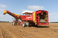 17.9.2020 Lifting main crop potatoes in Lincolnshire.<br /> ©Tim Scrivener Photographer 07850 303986<br />      ....Covering Agriculture In The UK.